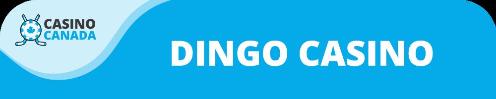 dingo casino banner